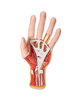 Hand-Struktur-Modell, 3-teilig, 3B Scientific, medishop.de