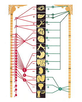 Das vegetative Nervensystem, Wandkarte 84 x 118cm, ohne Holzbestäbung, 3B Scientific, medishop.de