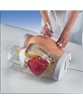I.m.-Injektions-Simulator mit Kontrollfunktion, 3B Scientific, medishop.de