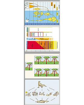 Entstehung und Evolution der Lebewesen Teil II, 24 Stück, 3B Scientific, medishop.de