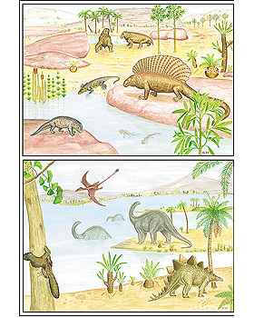 Entstehung und Evolution der Lebewesen Teil III, 30 Stück, 3B Scientific, medishop.de