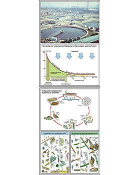 Gewässerschmutz - Gewässerschutz, 42 Stück, 3B Scientific, medishop.de