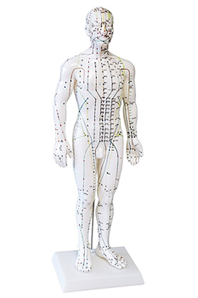 Akupunkturmodell Mann, ratiomed, medishop.de