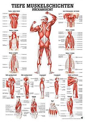 anat. Lehrtafel: Tiefe Muskeln Rückansicht 70 x 100 cm, laminiert, Rüdiger Anatomie, medishop.de