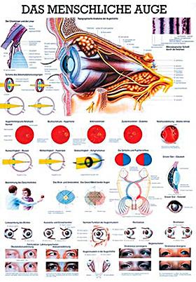 anat. Lehrtafel: Das menschliche Auge 70 x 100 cm, laminiert, Rüdiger Anatomie, medishop.de