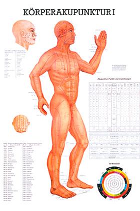 anat. Lehrtafel: Körperakupunktur I 70 x 100 cm, Papier, Rüdiger Anatomie, medishop.de