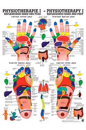 anat. Poster: Physiotherapie Reflexzonen Hand und Fuß, 50 x 70 cm, Papier, Rüdiger Anatomie, medishop.de