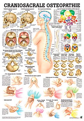 anat. Lehrtafel: Craniosacrale Osteopathie 70 x 100 cm, Papier, Rüdiger Anatomie, medishop.de