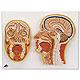 Median- und Frontalschnitt des Kopfes, 1 Stück