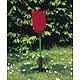 Tulpe (Tulipa gesneriana), 1 Stück