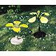 Wildraps (Sinapis arvensis)