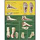Der Fuß, Pes, Lehrtafel 50 x 67cm