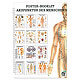 Mini-Poster Booklet: Akupunktur