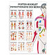Mini-Poster Booklet: Physiotherapie