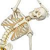 Flexible-Skelette