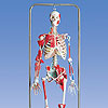 Spezial-Skelette